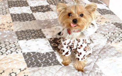 Pet Ownership Influences Millennial Home Buyers